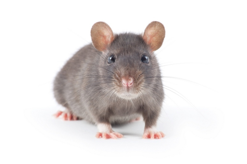 уничтожения мышей
